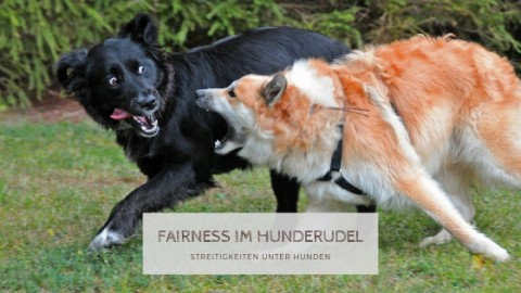 Fairness im Hunderudel