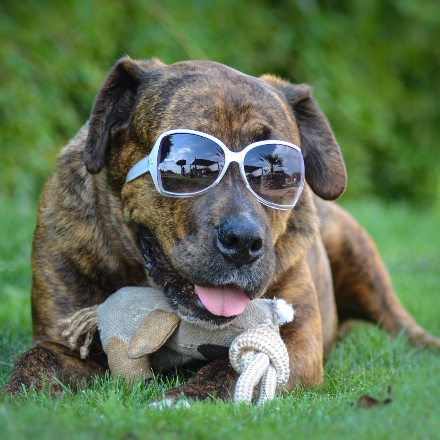 Fakten über uns Hundebesitzer