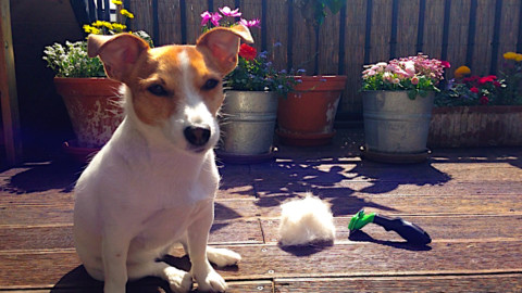 Wie könnt ihr euren Hund im Fellwechsel unterstützen und welche Bürste ist wofür praktisch?
