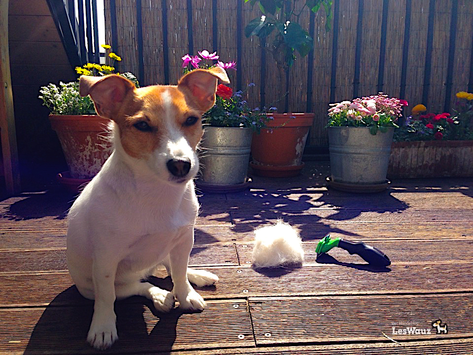 Fellpflege Hund Tipps