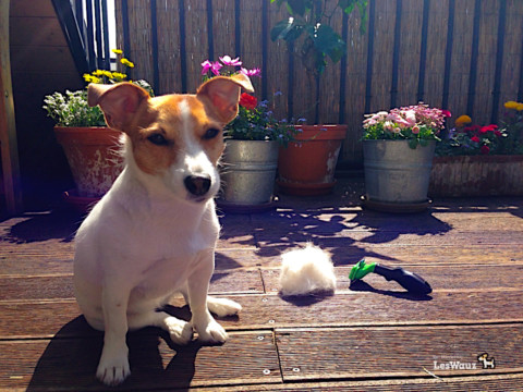Wie könnt ihr euren Hund im Fellwechsel unterstützen?