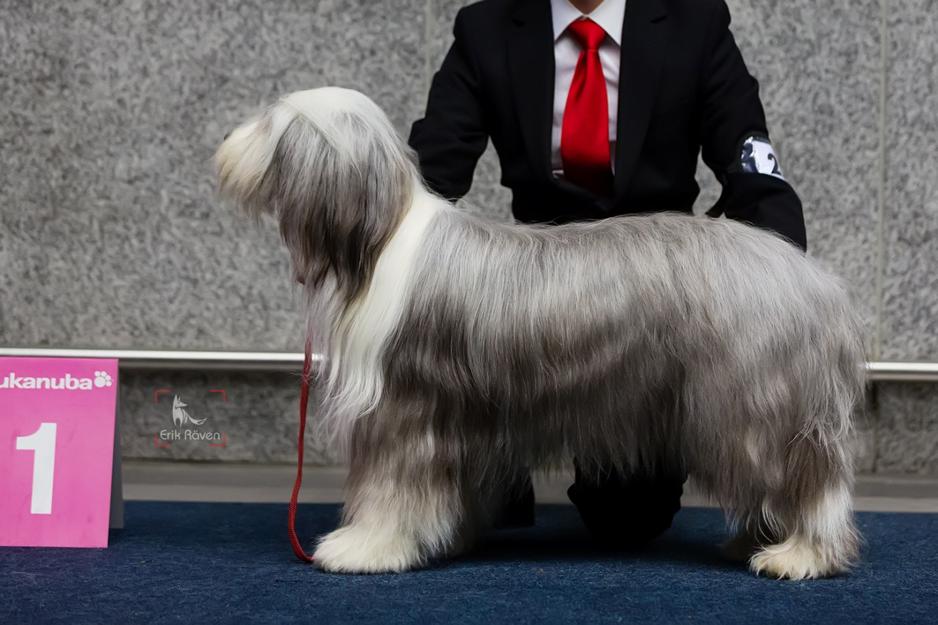 Fellpflege beim Hund 11