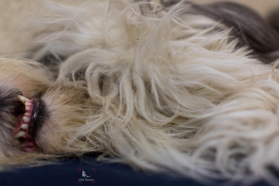 Fellpflege beim Hund 12