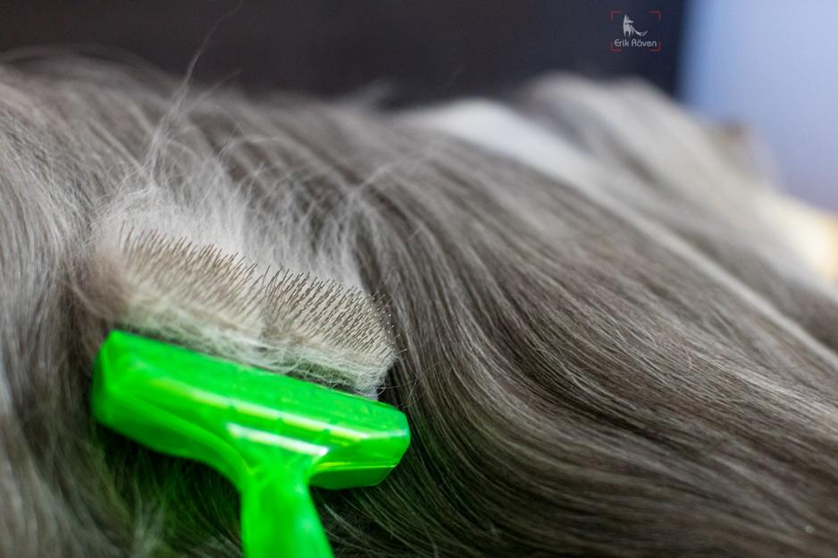 Fellpflege beim Hund Bearded Collie Bürste 15
