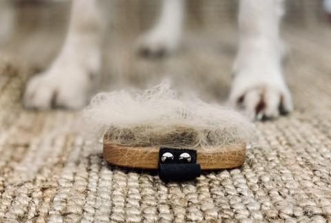 Über Unterwolle & Fellwechsel beim Hund