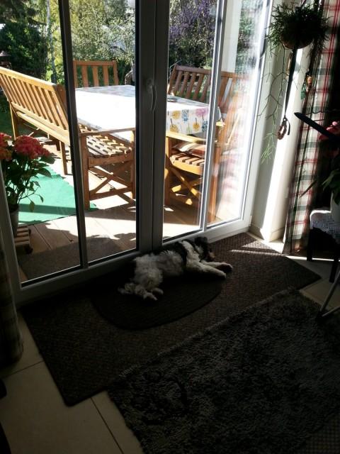 Urlaub ohne Hund – 4 Gründe warum das nicht sinnlos ist.