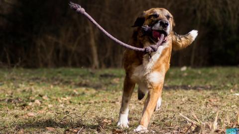 Ein Tracker für den Hund – Enkman goes digital
