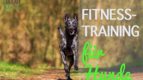 Fitnesstraining für Hunde – viel mehr als waghalsige Tricks