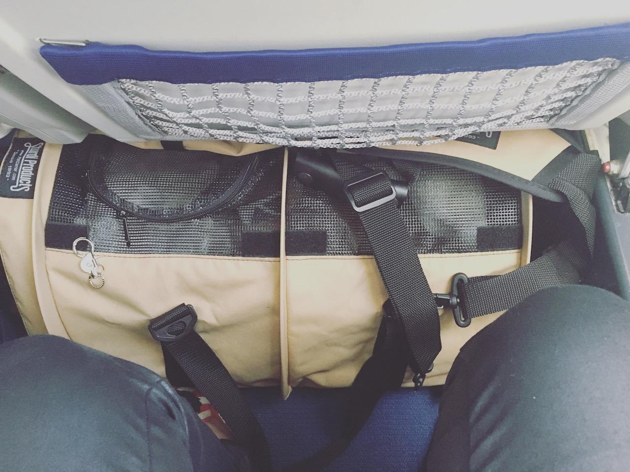 Fliegen Flug mit Hund in der Kabine