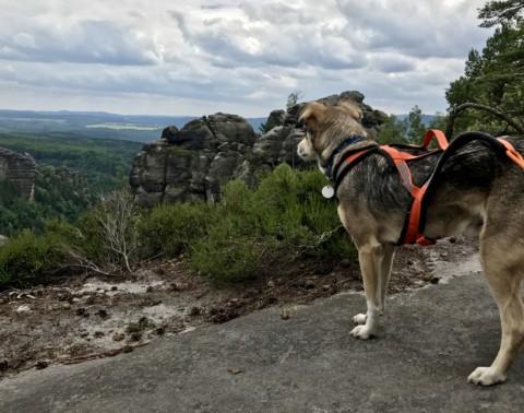 Wandern im Elbsandsteingebirge Tag 1&2