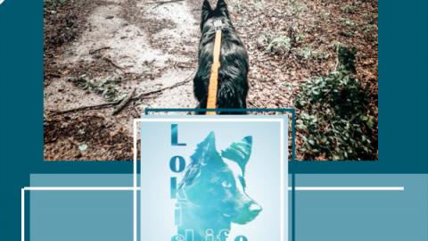 Wanderrouten mit Hund: Acht Kilometer durch den Urwald Hasbruch (inklusive .gpx-Daten)