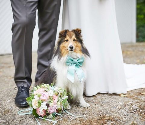 Hochzeit mit Hund – tolle Idee oder Chaos pur?