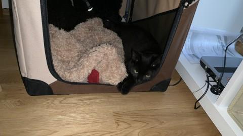 Boxentraining für Hund & Katz