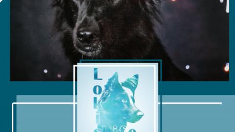 Silvester mit Hund: Mit diesen Tipps bereitest du deinen Hund auf Silvester vor