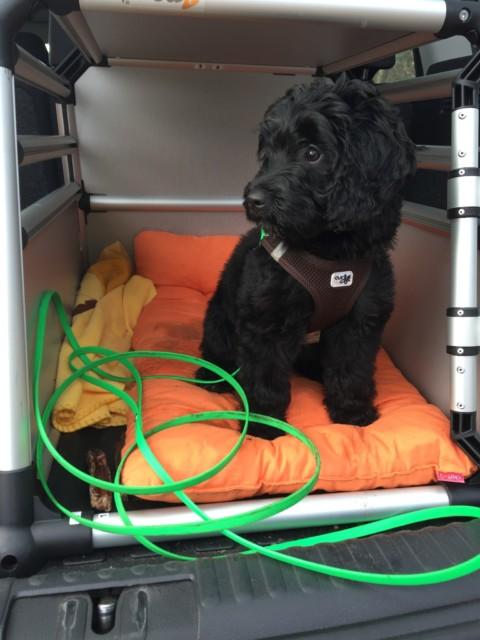 Tipps für Langstrecken mit Hund im Auto