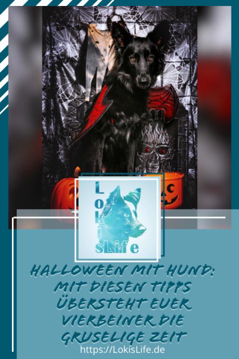 Halloween mit Hund: Mit diesen Tipps übersteht ihr und euer Vierbeiner die gruselige Zeit
