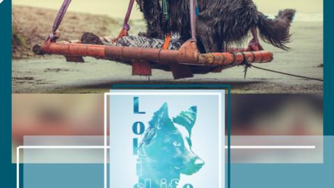 Camp Canis X: Mit dem Hund über Stock und Stein durch die Wingst