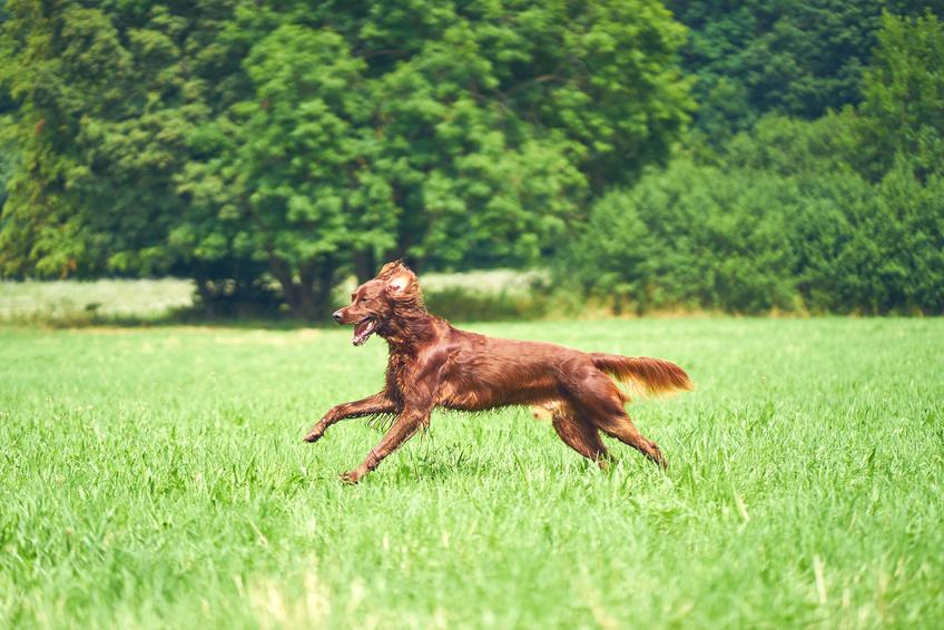 Hund entlaufen was ist zu tun