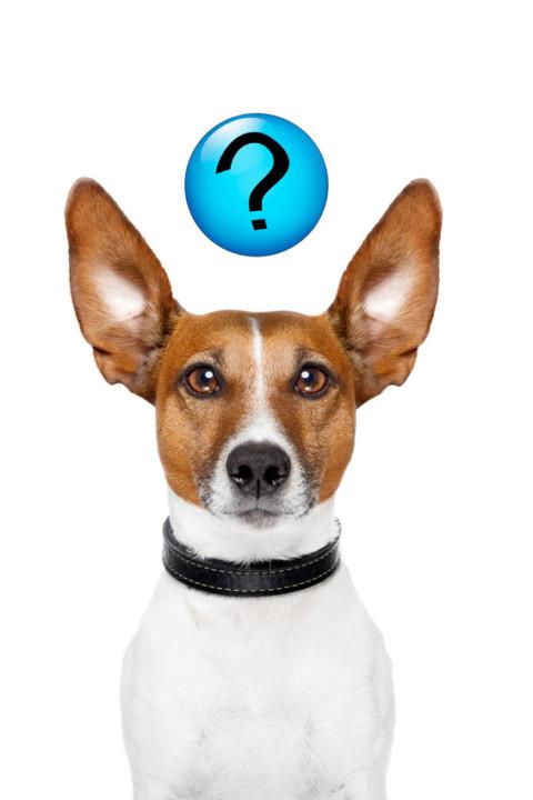 40 Gründe warum der Hund nicht kommen kann Teil 1