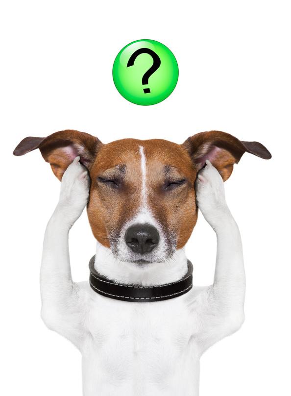 40 gründe warum der Hund nicht kommt