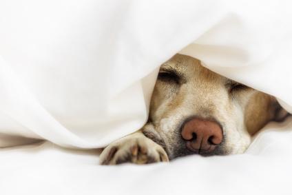 Kommando Hund zur Ruhe kommen