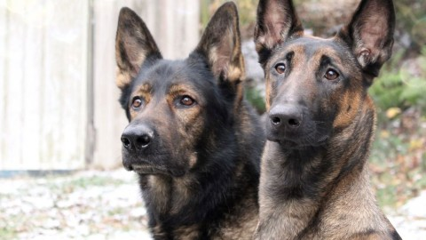 Fotoshooting mit Hund: so klappt es! Tipps für das perfekte Foto