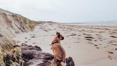 Silvester mit Hund – Böllerfrei in der Normandie