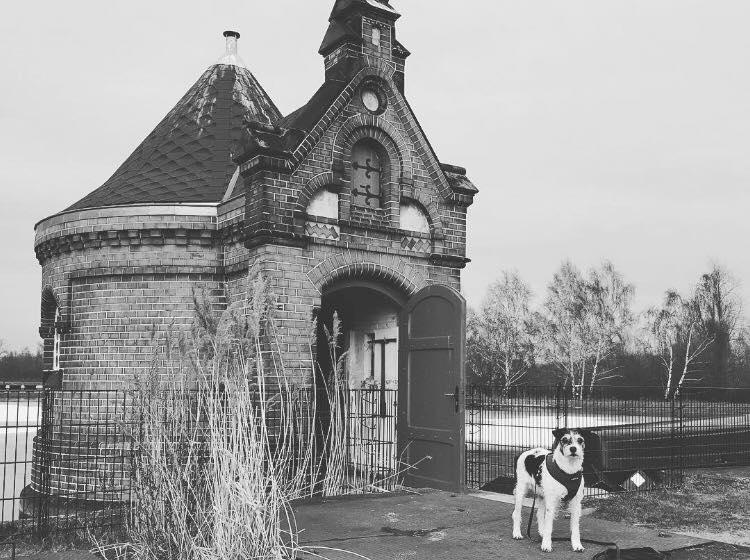 Tipps für Hamburg mit Hund
