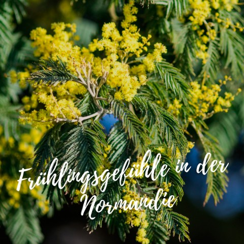 Frühling in der Normandie