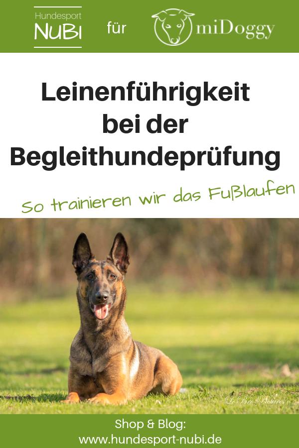 Fußlaufen bei der Begleithundeprüfung, Hund bei Fuß gehen beibringen - Hundeblog Hundesport Nubi