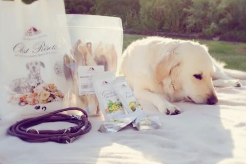 Neulich in Mannheim: unser Hunde-Shopping-Rausch bei Martha & Lotte