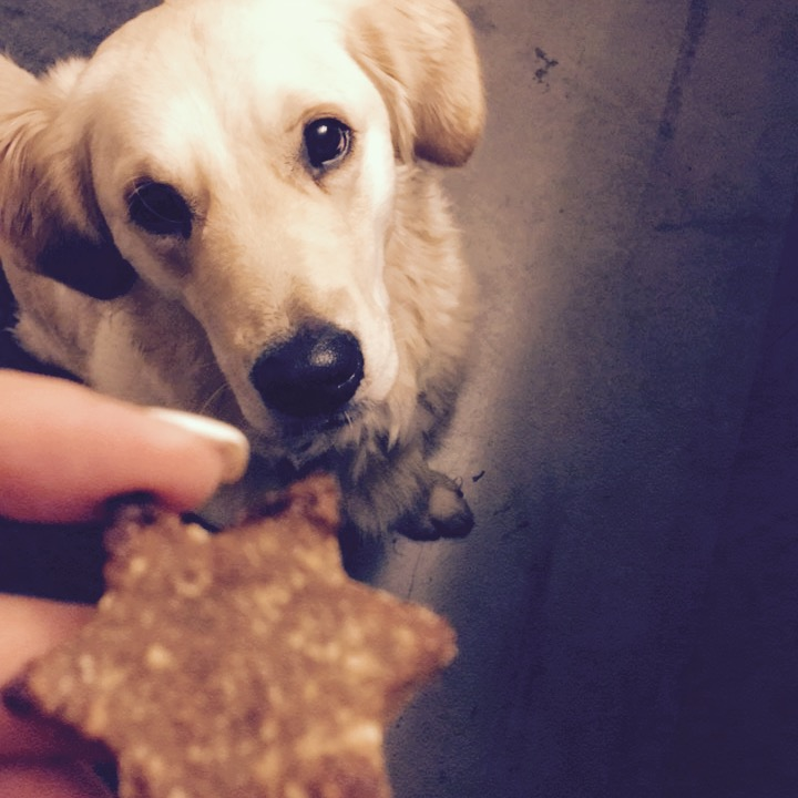 Glutenfreie Kekse für Hunde zum selbermachen