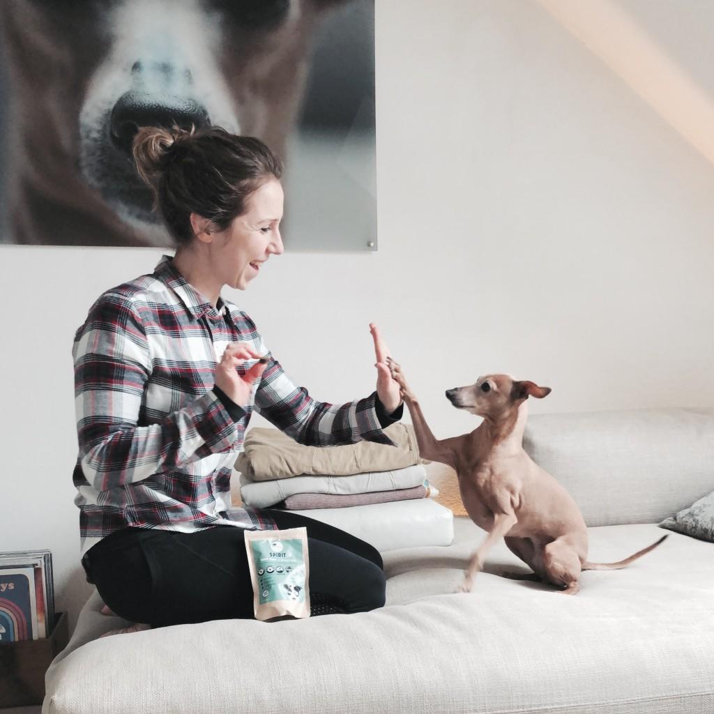 Futter fuer den Hund aus Insekten