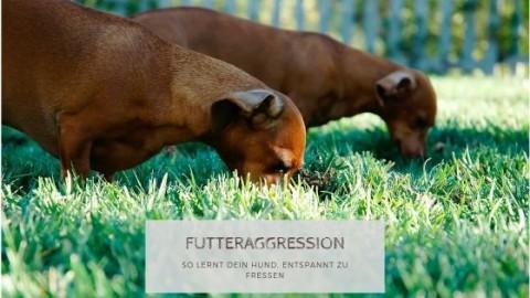 Futteraggression – So lernt dein Hund, entspannt zu fressen
