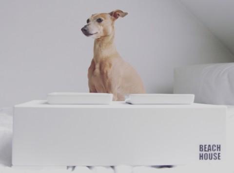 Beachhouse goes Porzellan – oder welcher Napf ist der Richtige? [für Euch getestet]