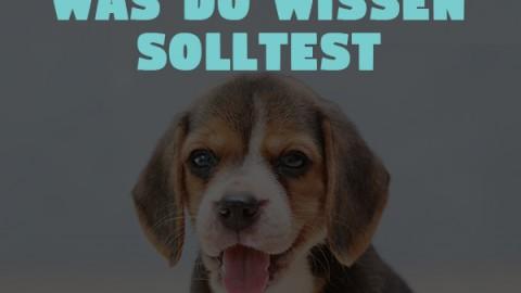 Giftige Lebensmittel für Hunde: Was du wissen solltest