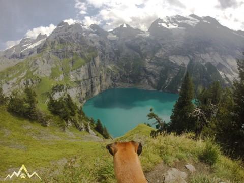 Wanderung mit dem Hund über den Heuberg-Weg um den türkis-blauen Oeschinensee