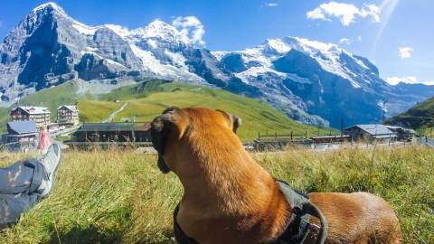 Wanderung mit dem Hund über Höhenweg vom Männlichen zur kleinen Scheidegg