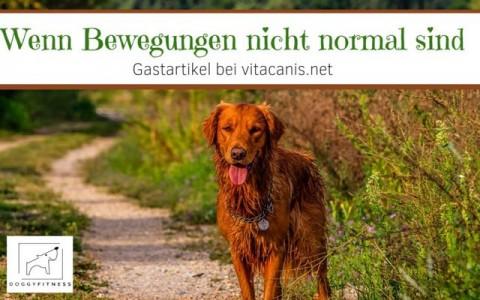 Kaninchenhoppeln beim Hund? – Wenn Bewegungen nicht normal sind – Gastartikel bei vitacanis