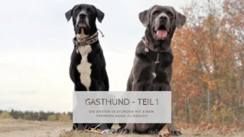 Gasthund im Lieblingsrudel: Die ersten 48 Stunden