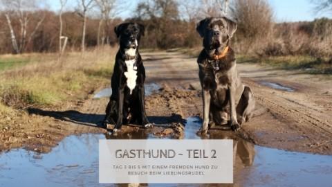 Gasthund im Lieblingsrudel: Tag 3 bis 5
