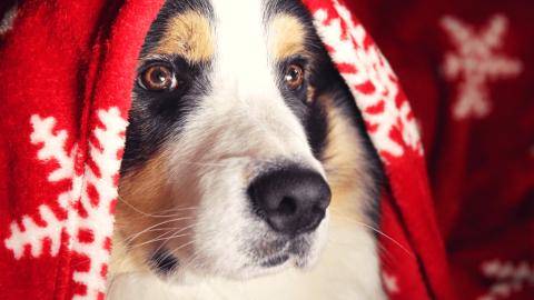 Geschenke für Hundesportler – 20 Ideen, was du Weihnachten schenken kannst