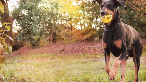 Gesunder Hund im Herbst – Sicherheit und Sichtbarkeit