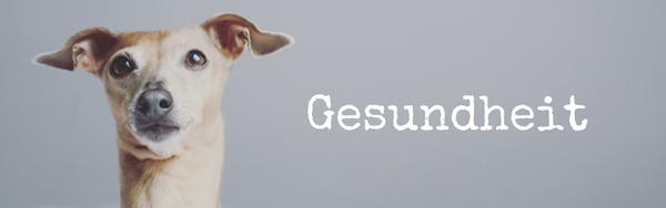 Gesunder Hund miDoggy-Blog-Community-für-Hunde-Gesundheit-Krankheit
