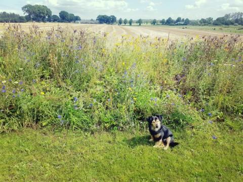 Zehn für Hunde giftige Pflanzen aus unserem Alltag