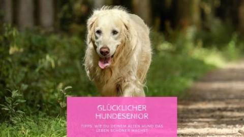7 Tipps wie du deinem Hundesenior das Leben leichter machst
