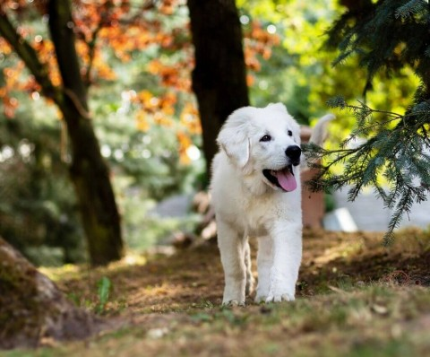 Hundetraining für Welpen und Junghunde, Sarah Both – Rezension [Werbung]