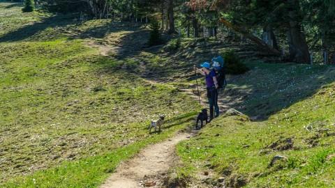 Wandern mit Kleinkind und Möpsen am Grünten im Allgäu