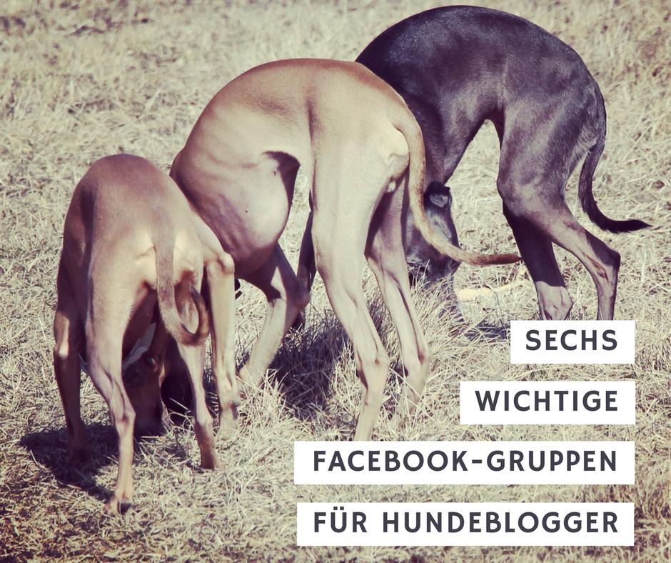 Facebook-Gruppen für Hundeblogger