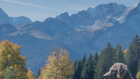 Hallo Zugspitze! Bayerisches Voralpenland mit Hund